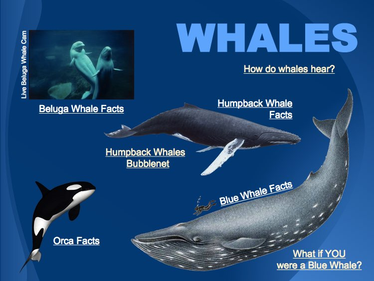 Whales - Google Slides
